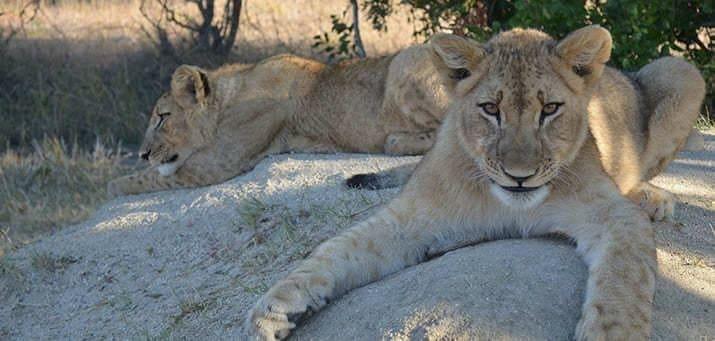 Afrika Safari Reisen von Enricos Safaris